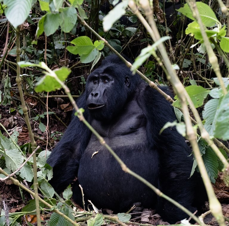 Bwindi-Impenetrable-National-Park-Uganda-Tours