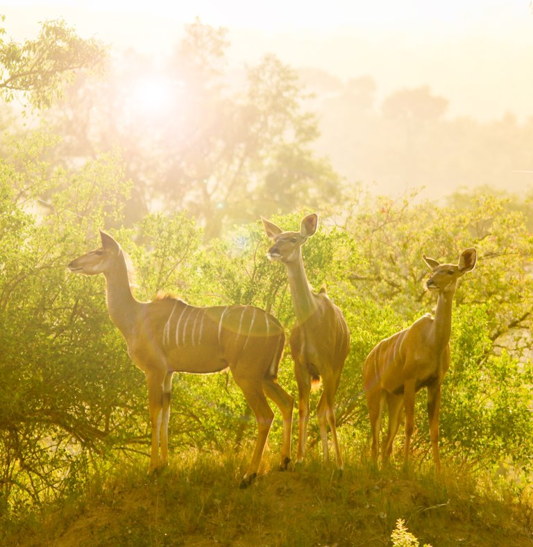 Kruger National Park Safari Tour (2