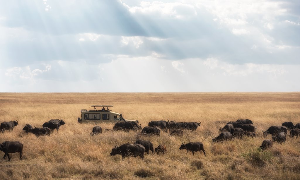 Serengeti-National-Park-Tanzania-Safari-Tours (4)
