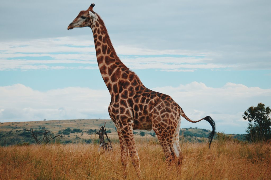 South Africa Animals - Wildlife in South Africa (14)
