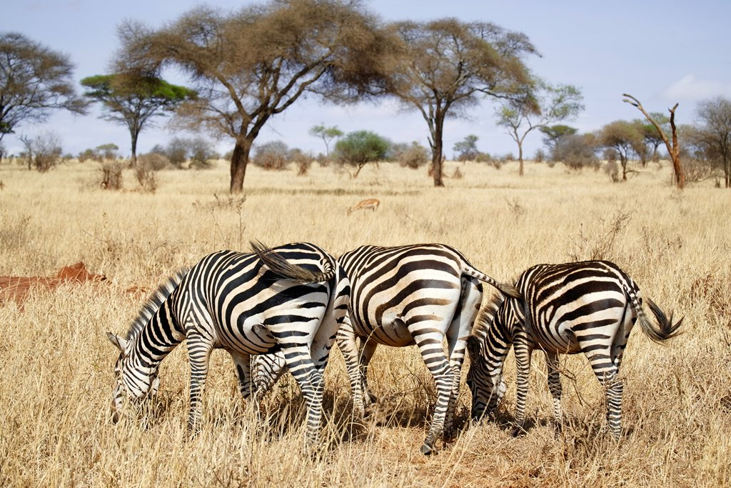 Tarangire-National-Park-Tanzania-Safari